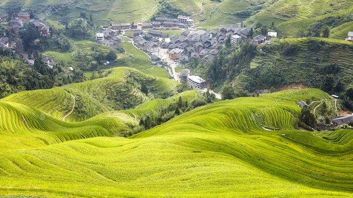 Longji Rice terraces landscape, China.