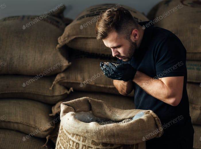 young worker sniffing a fistful of fresh raw beans from burlap bag at coffee roaster warehouse