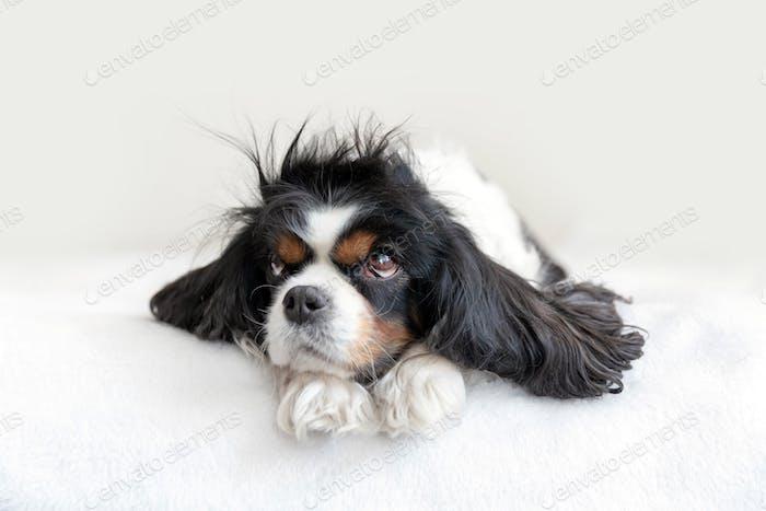 Portrait of funny dog