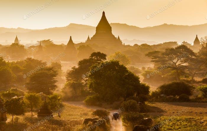 Die Tempel von Bagan bei Sonnenaufgang, Bagan (Pagan), Myanmar
