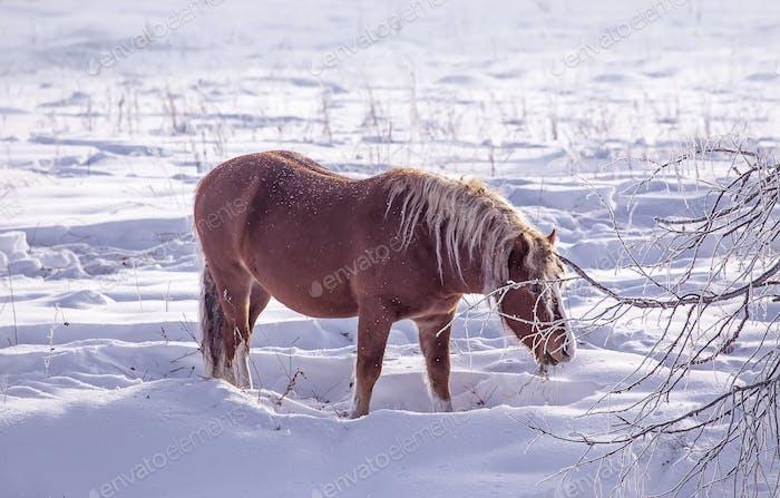 Ein braunes Pferd bleibt im Winter im verschneiten Wald