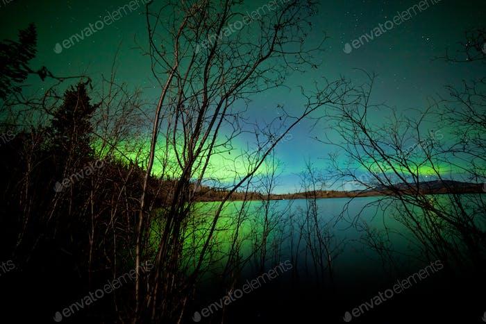 Northern lights shore willows lake surface mirror