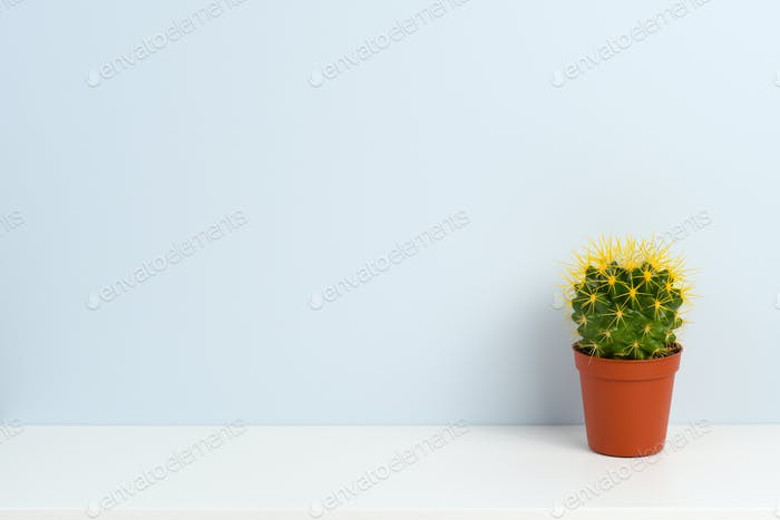 Cactus in pot on white shelf near blue wall