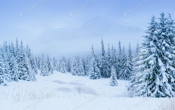 wonderful winter landscape
