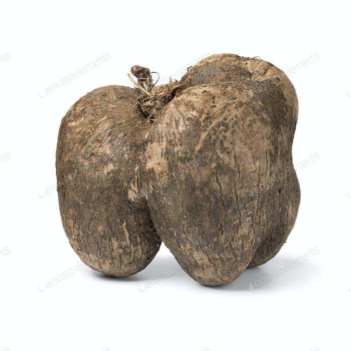 Single fFresh raw brown yam