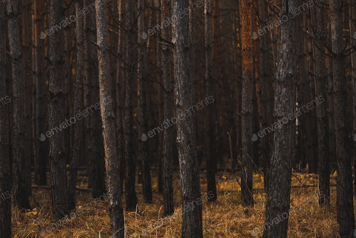 Moody Dark Forest. Desaturated Colors, Vintage Effect