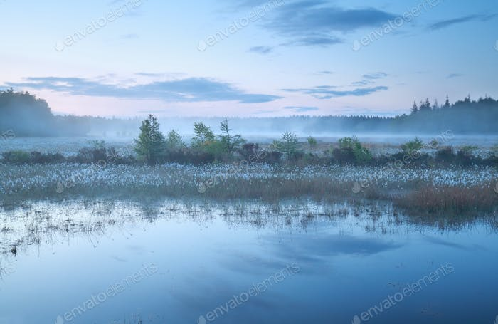 misty morning on swamp at dusk