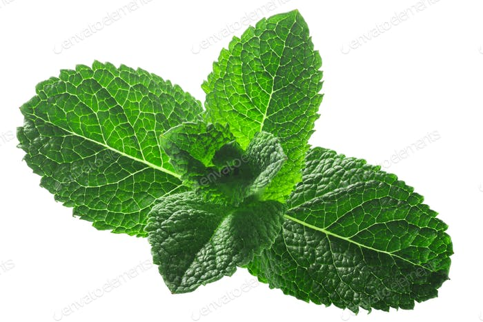 Peppermint leaves (Mentha piperita foliage) isolated w clipping paths