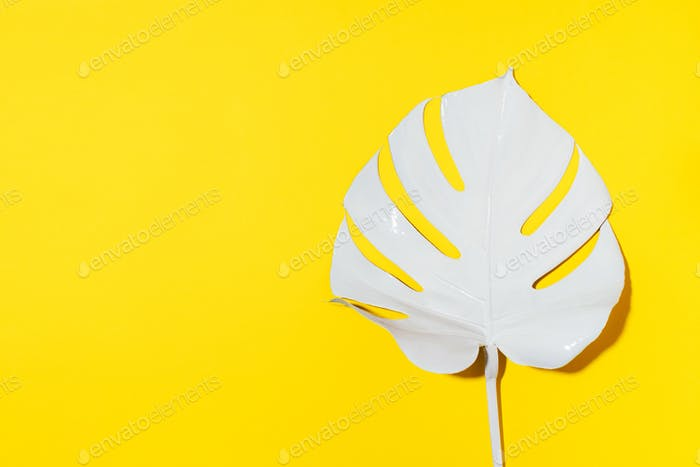White painted monstera tropical leaf on yellow background. Summer minimal concept.