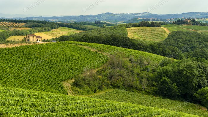 Summer landscape in the Chianti region at summer