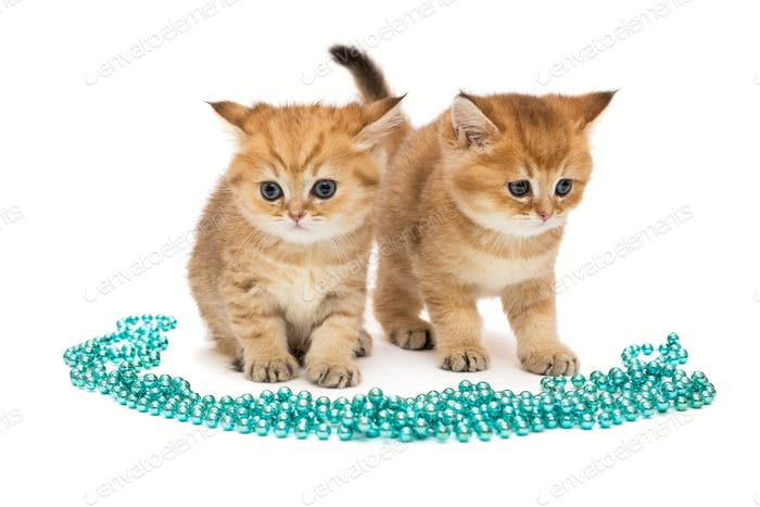 Two little  kitten and Christmas decorations