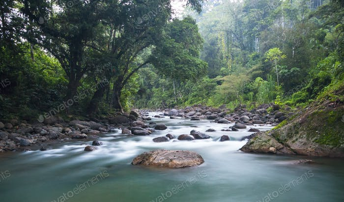 Tscui River and Dense Jungle in Costa Rica