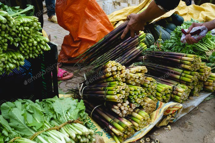 Lila grüne Bambussprossen zum Verkauf