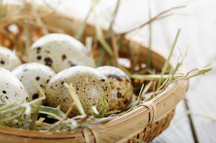 Frische Bio-Wachteleier im kleinen Weidenkorb auf rustikaler Kitche