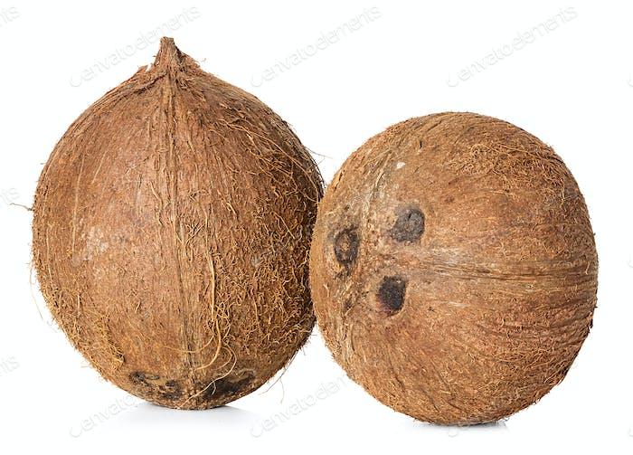 Kokosnuss auf weißem Hintergrund isoliert
