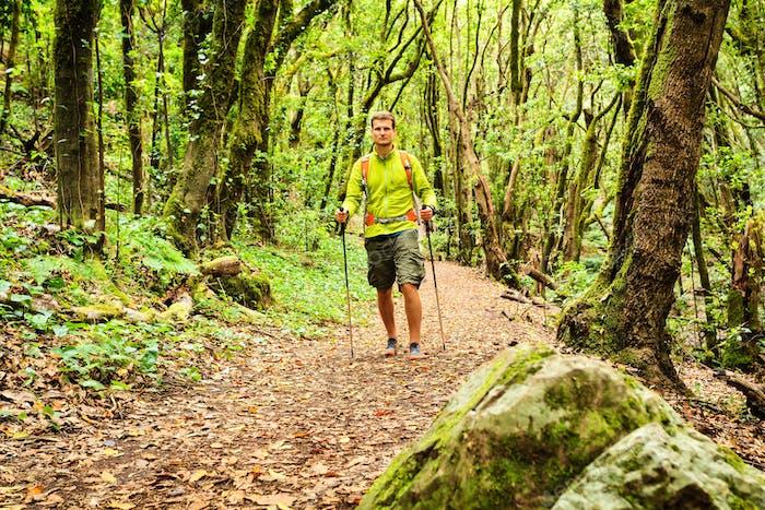 Wanderwanderung im grünen Wald