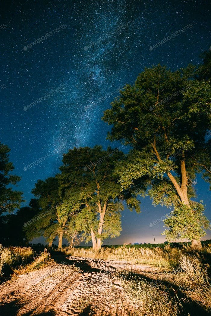 Milky Way Galaxy In Night Starry Sky Above Tree In Summer Forest