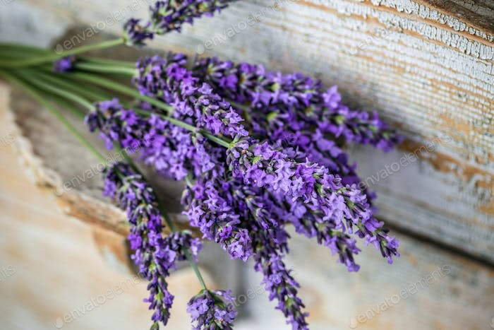 Lavender plant flowers bunch