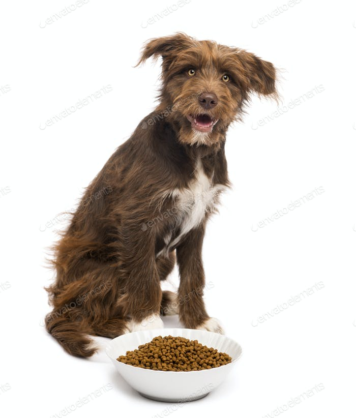 Crossbreed, 5 months old, sitting behind a bowl full of dog food against white background