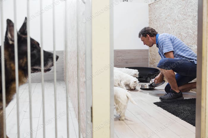 Man feeding dogs in day care center