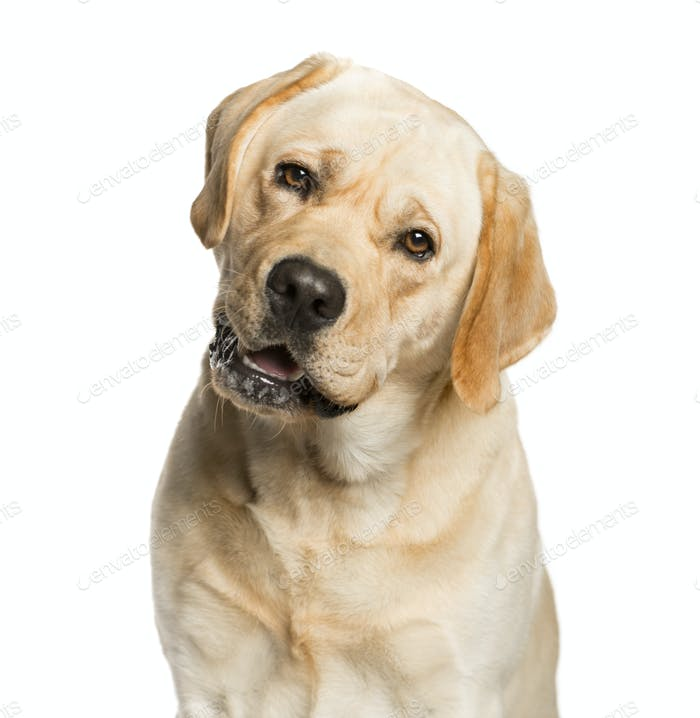 Close-up of a Mixed-breed Dog Looking at the camera, Dog, pet, studio photography, cut out