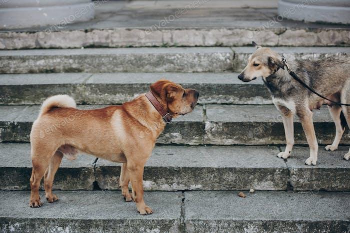 Две собаки разговаривают на улице
