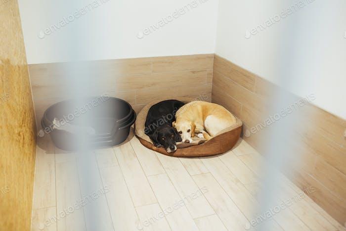 Dogs resting in pen