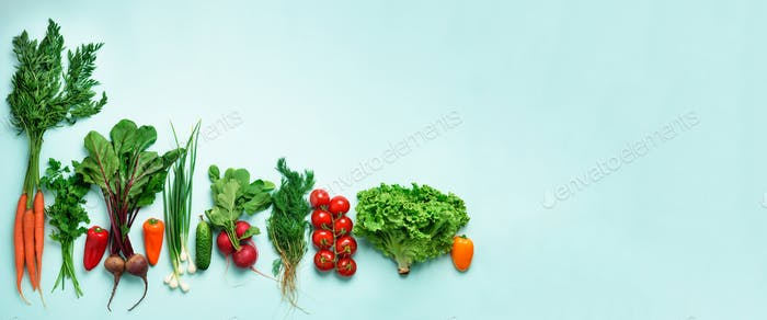 Organic vegetables and garden tools on blue background with copy space. Banner. Top view of carrot