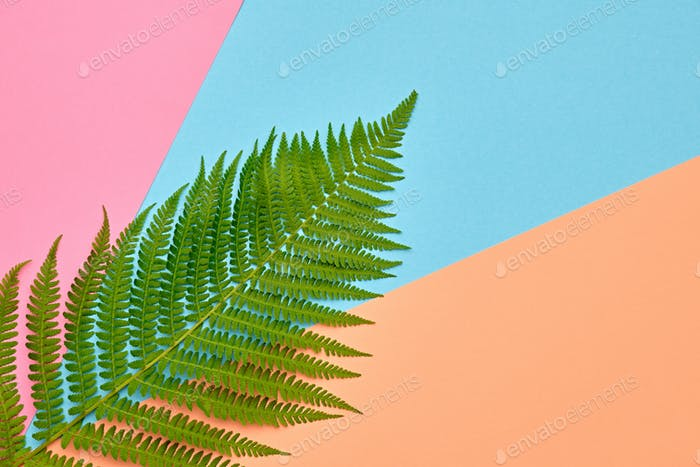 Autumn Art. Fall Fashion.Minimal.Fern Leaf on Pink