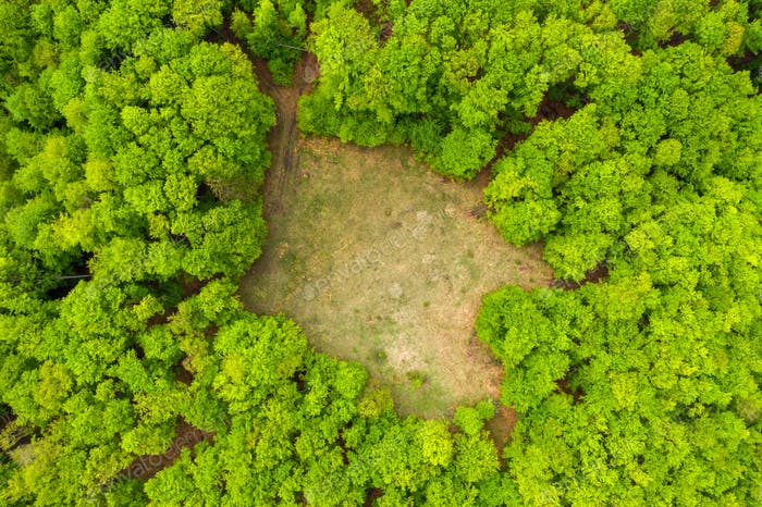 Glade meadow in a green forest, aerial drone shot