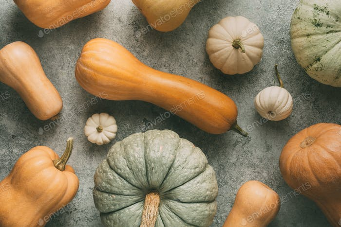 Different pumpkins on grey background
