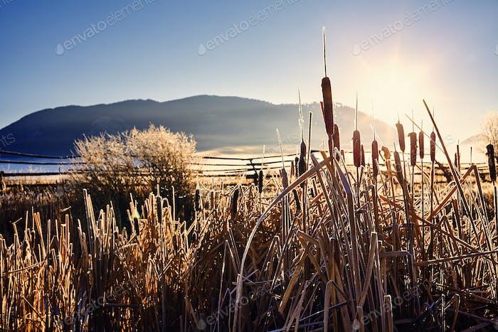 Golden frosty sunrise, Wyoming, USA.