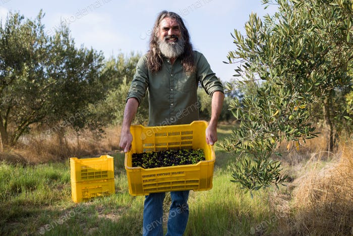Portrait of happy man holding harvested olives in crate