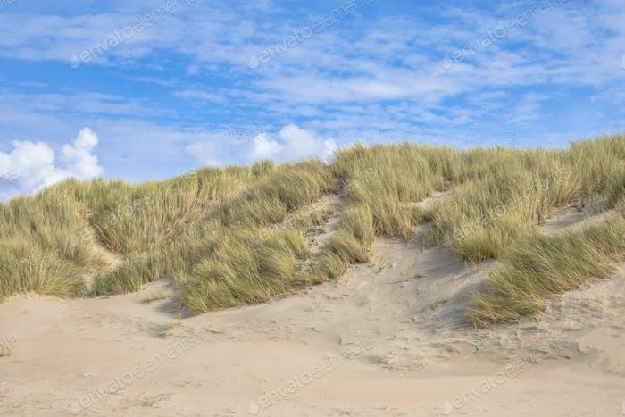 Dunes by the ocean