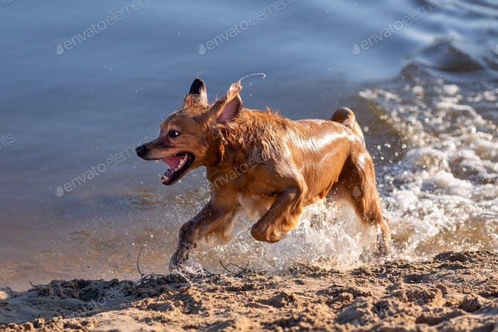 Dog having fun by the water