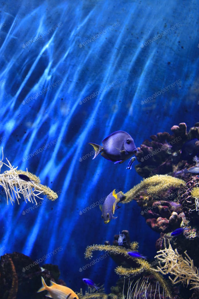 Schöne bunte Unterwasser-Meereslebewesen