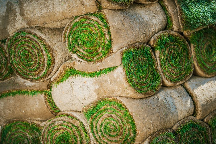 Rolled Natural Grass Turf