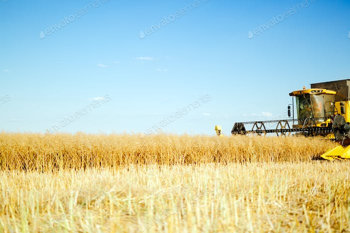 Combine working in fields
