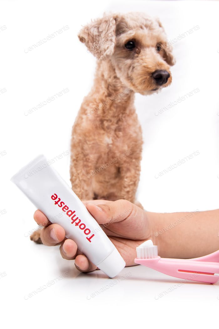 Hand holding toothbrush and toothpaste with pet dog in background