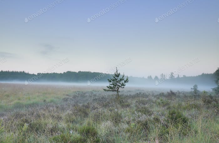 misty morning over forest meadow