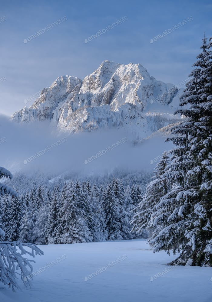 Wintermorgen im Wald und in den Bergen