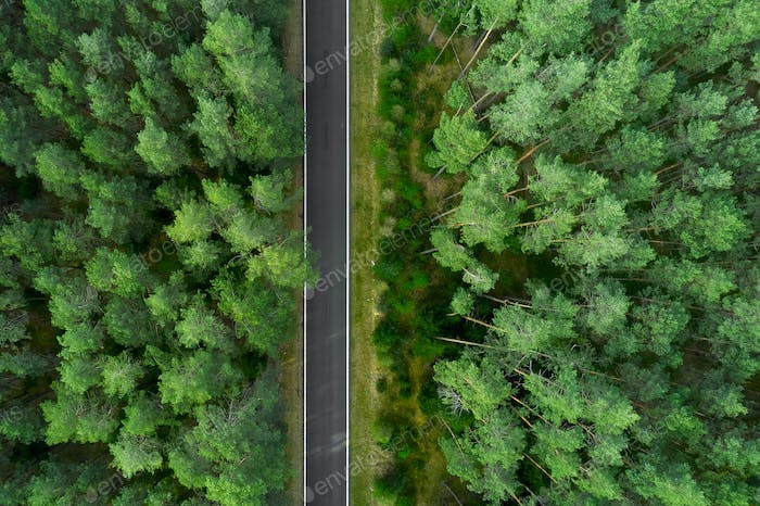 Top view on the top of high pine trees and road in the middle. Road in the forest