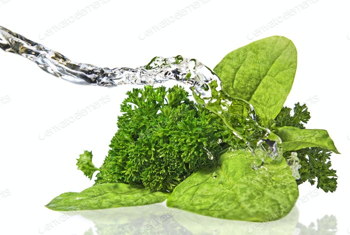 Bouquet of parsley and spinach isolated on white