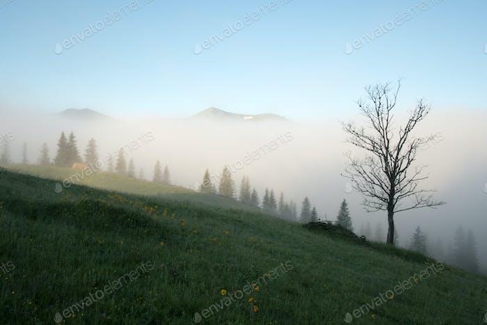 Alone tree on foggy meadow
