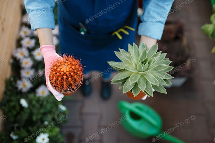 Female gardener hands with home flowers, shop