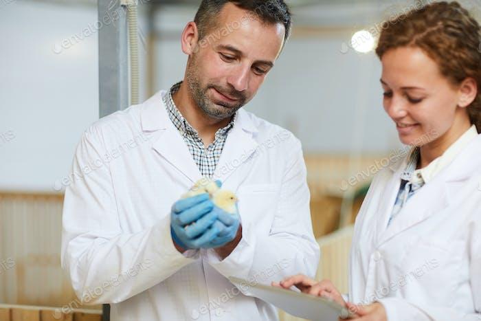 Ingenieure der Geflügelfarm