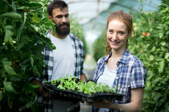 Young couple of farmers working in greenhouse