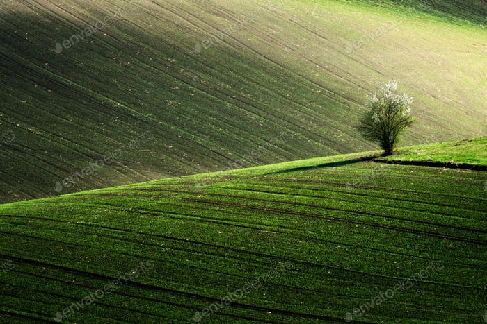 Detail scenery at South Moravian field during spring, Czech republic.