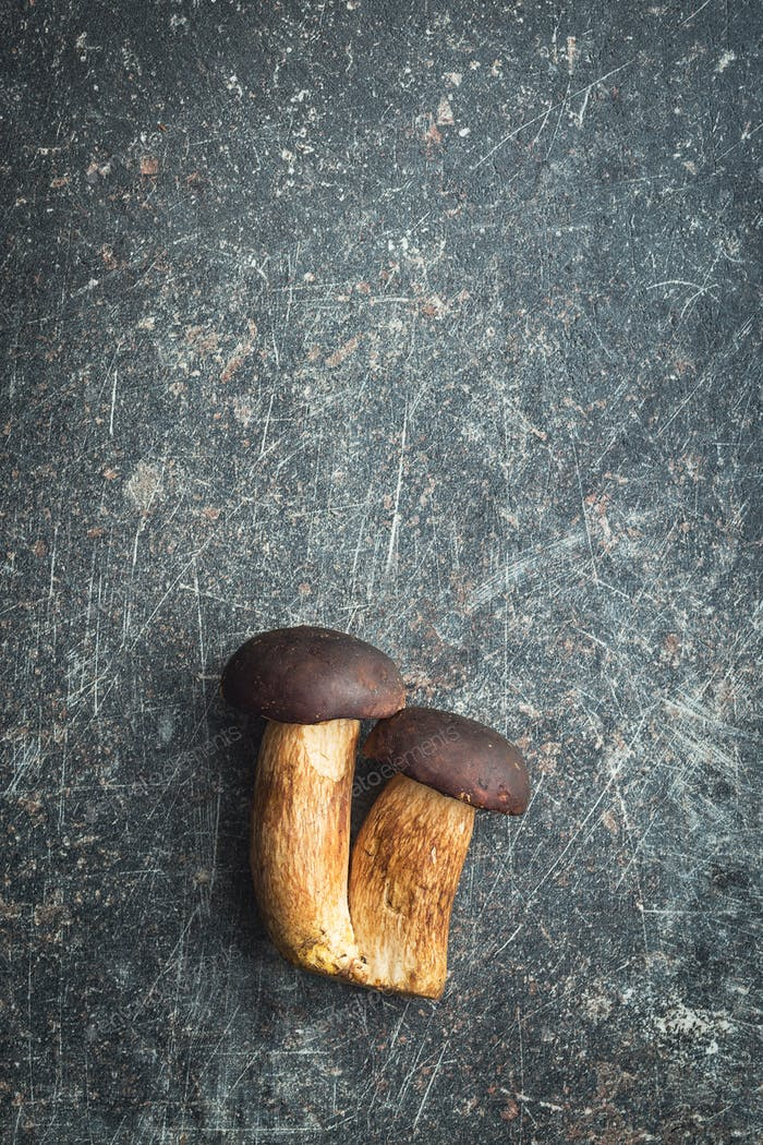 Fresh boletus mushrooms.