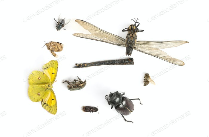 Composition with dead insects, isolated on white
